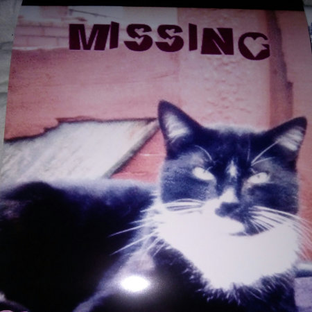 Missing British Short Hair Cat in Bury