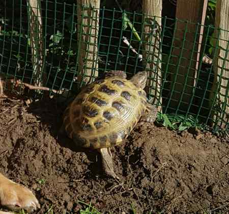 Lost Tortoise Exotic in Sevenoaks