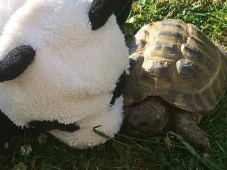Missing Tortoise Exotic in Poole