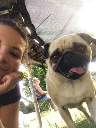 Missing Pug Dog in Backwell