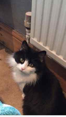 Lost Moggy Cat in Bulwell