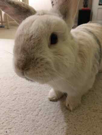 Missing Unknown - Other Rabbits in Crawley
