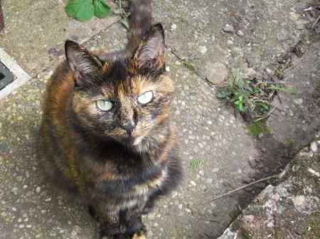 Missing Tortoiseshell Cat in West Midlands