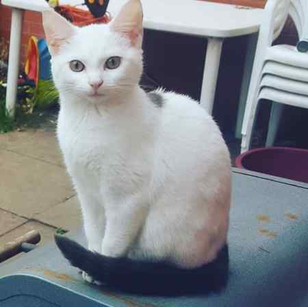 Missing Mixed Breed Cats in Blackheath