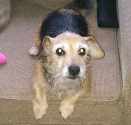 Missing Cross Mixed Dog in Orpington