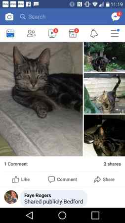 Missing Tabby Cats in Manchester