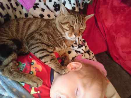 Missing Bengal Cats in Reading