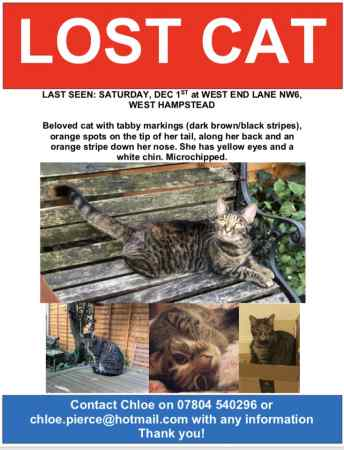 Missing Domestic Short Hair Cats in West Hampstead