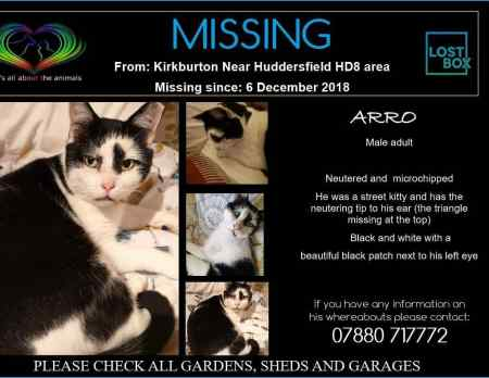 Missing British Short Hair Cat in Kirkburton