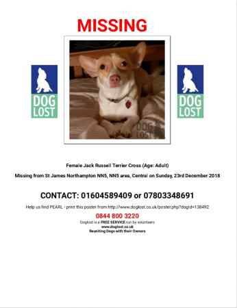 Missing Cross Mixed Dog in Northampton