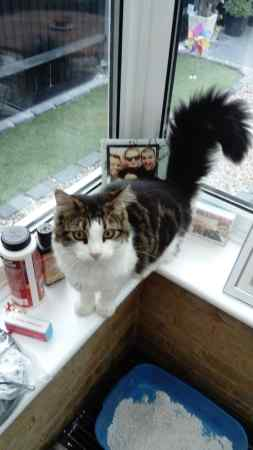 Missing Moggy Cats in Crawley