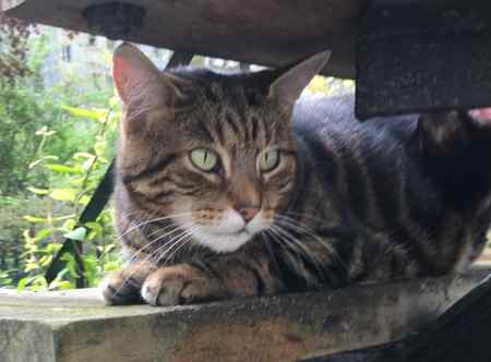 Missing Tabby Cat in Notting Hill