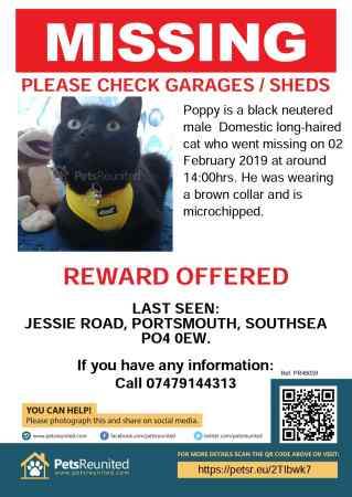 Missing Unknown - Other Cats in Portsmouth