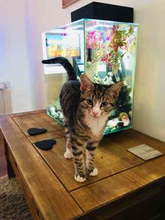 Missing Tabby Cat in St George's Retail Park Leicester