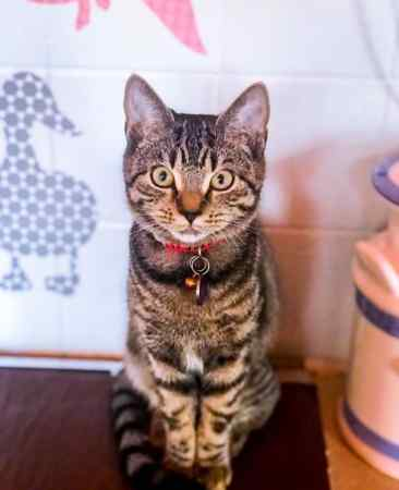 Missing Tabby Cat in Northallerton, Romanby