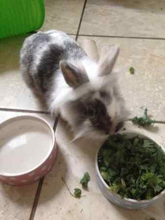 Lost Unknown - Other Rabbit in Westhoughton