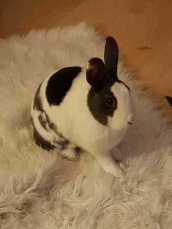 Missing Unknown - Other Rabbit in Somercotes