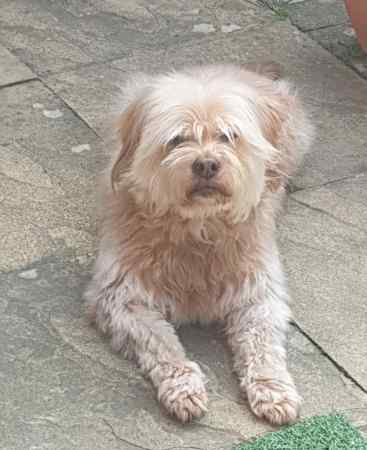 Missing Unknown - Other Dogs in Hayes