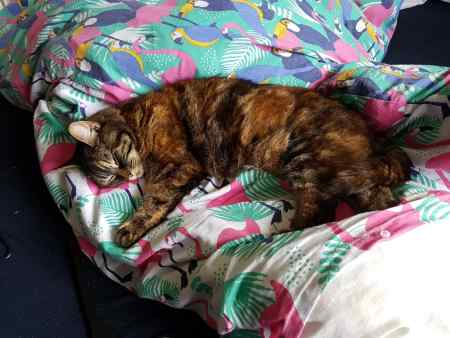 Missing Moggy Cat in Chessington