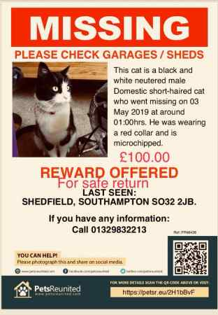 Missing Domestic Short Hair Cats in Shedfield