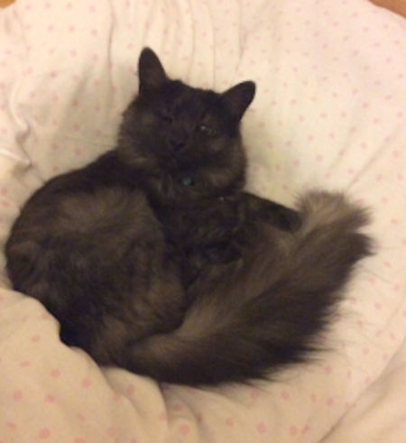 Missing Unknown - Other Cat in Tewkesbury