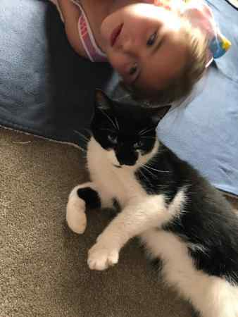 Missing Domestic Short Hair Cat in Wellington