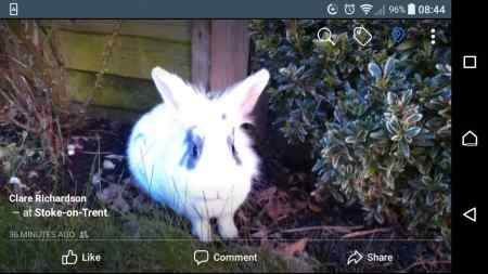 Lost  Rabbit in Newcastle Upon Tyne