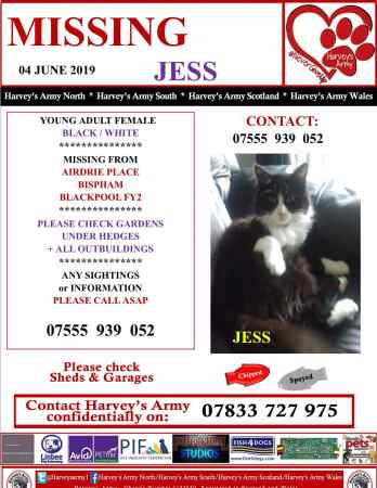 Missing Semi-Long Hair Cat in Blackpool