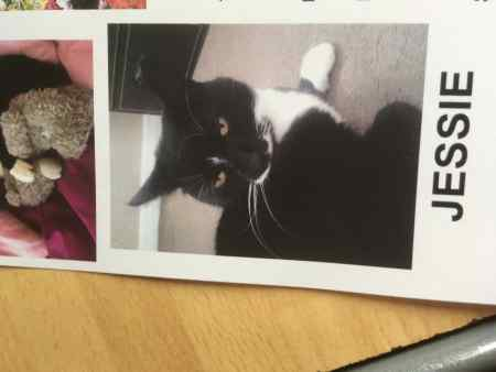 Missing British Short Hair Cat in Lincoln