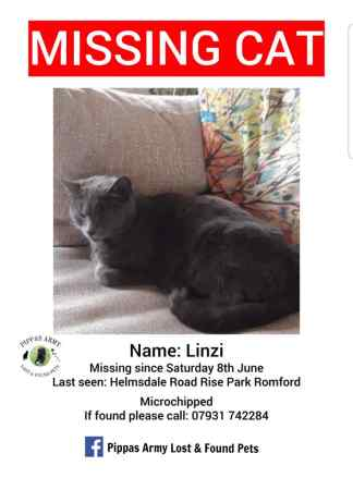 Missing Domestic Short Hair Cat in Romford