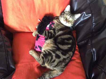 Missing Tabby Cat in Erdington