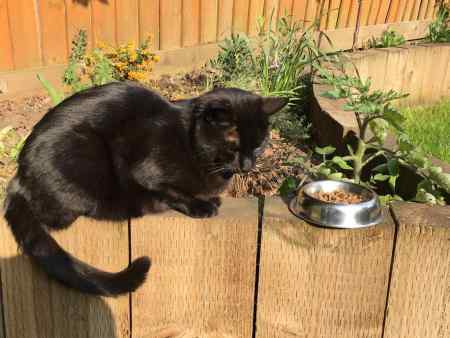 Missing Moggy Cat in Haringey