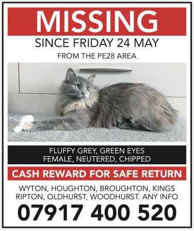 Missing Moggy Cat in Wyton Area