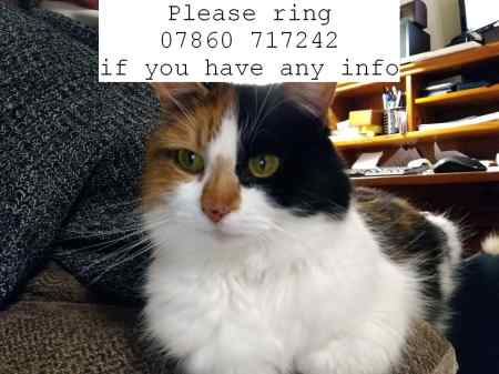 Missing Moggy Cat in Leavenheath