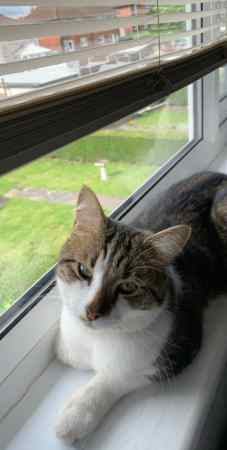 Missing Tabby Cats in Leeds
