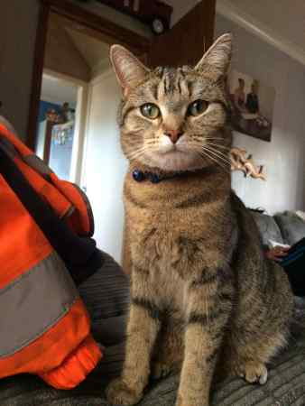 Missing Moggy Cat in Castleford