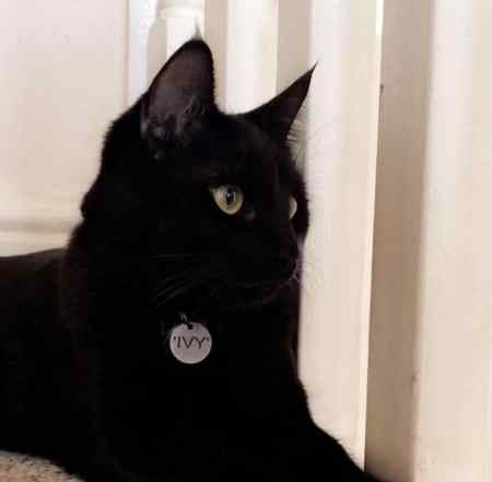 Missing Domestic Short Hair Cats in Theale