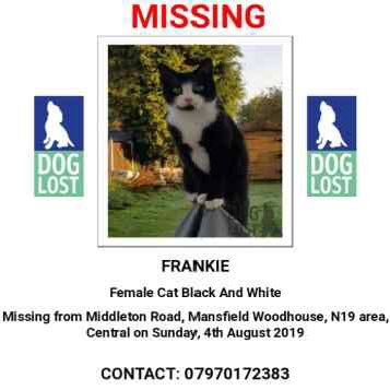 Missing British Short Hair Cats in Mansfield Woodhouse