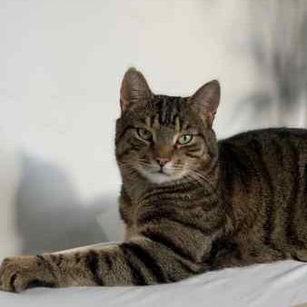 Missing Tabby Cats in London