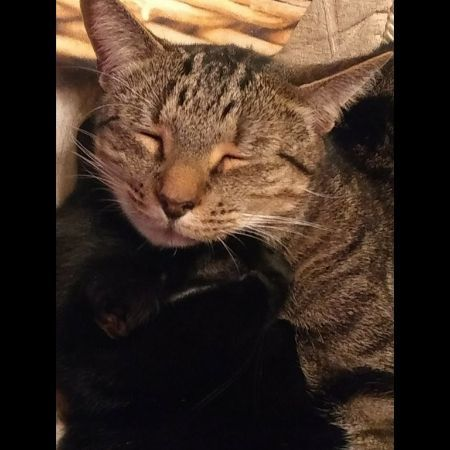 Missing Tabby Cats in Leicester