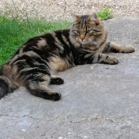 Missing Mixed Breed Cats in Witham