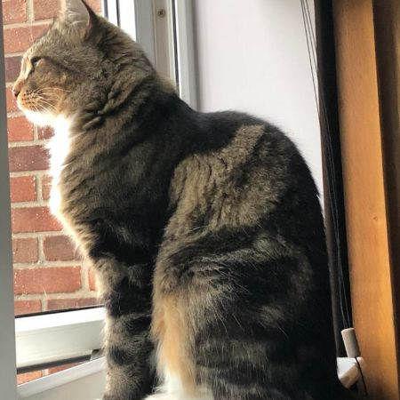 Missing Moggy Cats in Colchester