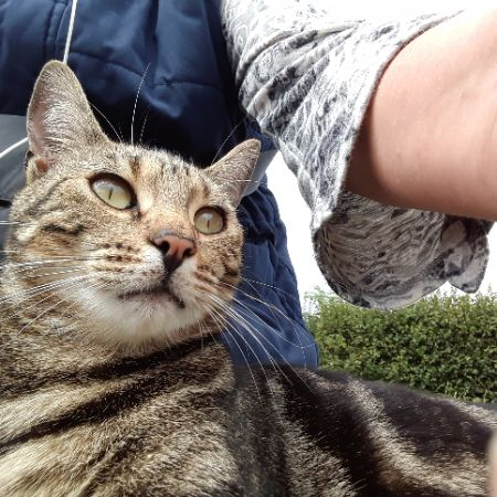 Missing Tabby Cats in Totnes