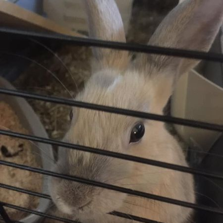 Missing Unknown - Other Rabbits in Norwich, Norfolk