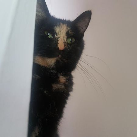 Missing Tortoiseshell Cats in Clydebank
