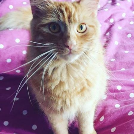 Missing Semi-Long Hair Cats in CHESSINGTON