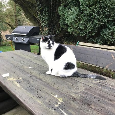 Missing Moggy Cats in Headley Thatcham