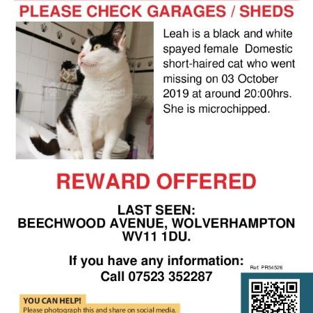 Missing Moggy Cats in Wolverhampton