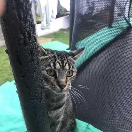 Missing Tabby Cats in East Dulwich
