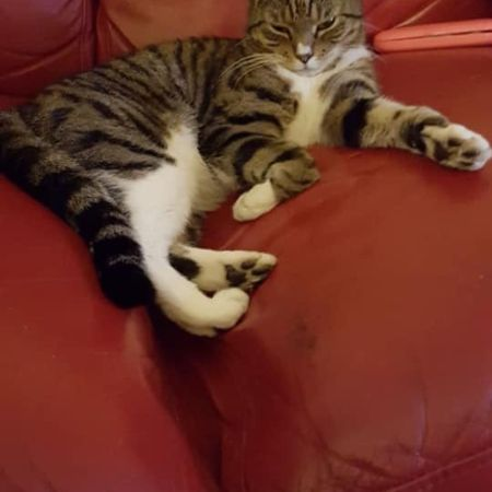 Missing Tabby Cats in Hampton
